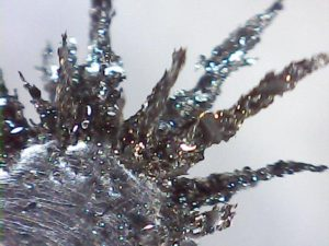 Detail špon nalezených v naftě